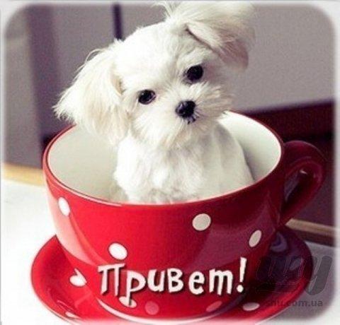 1339881073_kartinki_privet_6257-14.jpg