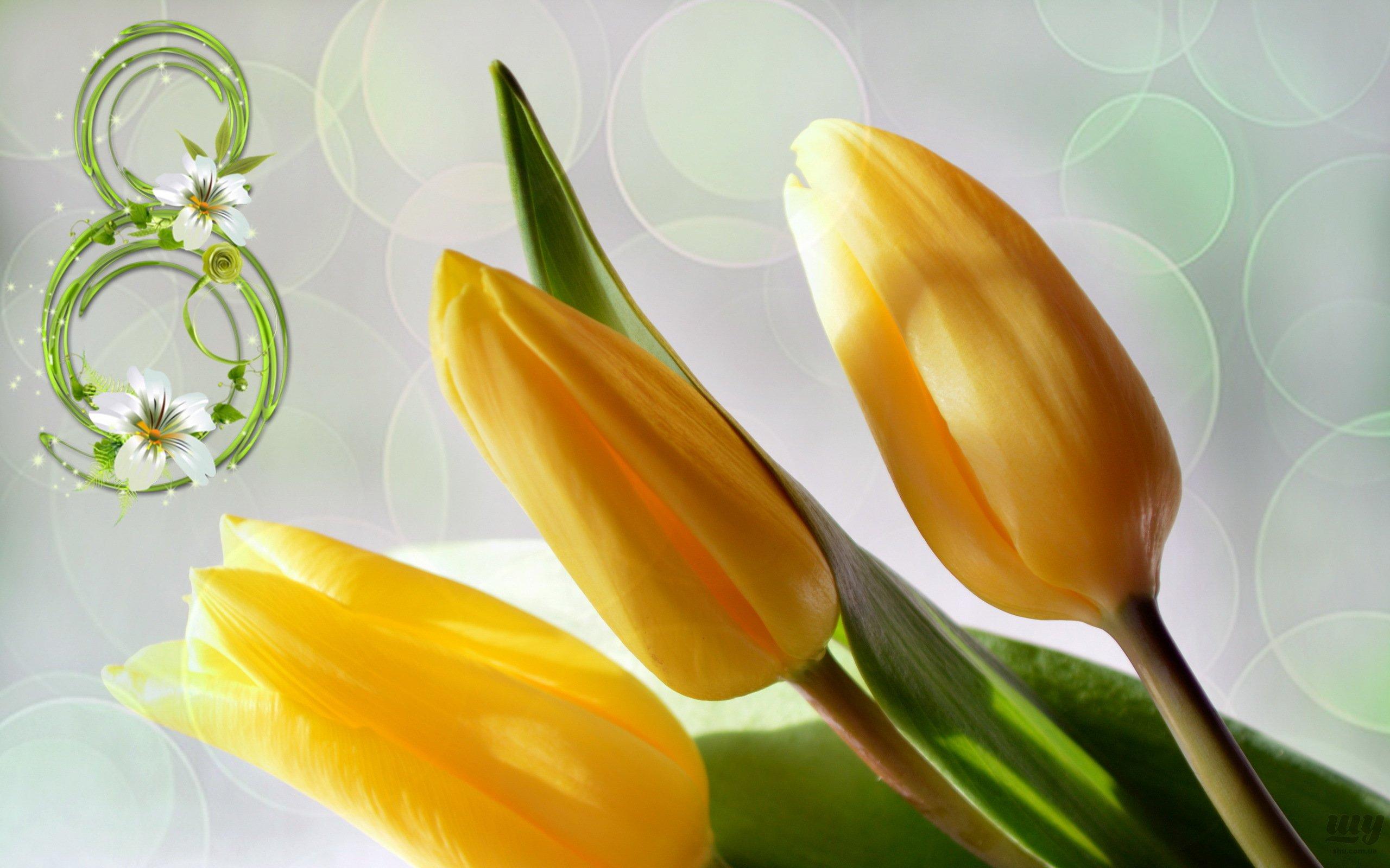 -happy-8-march-1699299-2560x1600.jpg