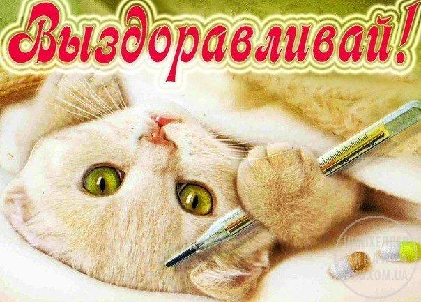 sms_vyzdoravlivaj_dlja_ljubimoj.jpg