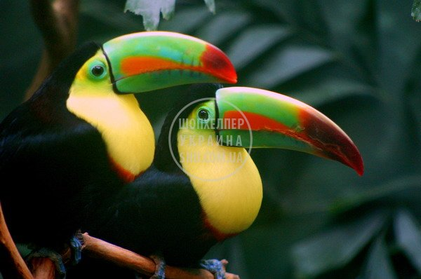 toucan_child_fantasy_03.jpg
